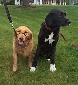 Clinton Hill Dog Friendly